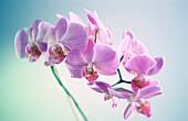 Artificial, Color, Colour, Concept, Concepts, Delicate, Detail, Details, Flower, Flowers, Horizontal, Horticulture, Indoor, Indoors, Interior, Petal, Petals, Plant, Plants, Plastic, CatV7, B75-603685, agefotostock