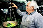 Man weighting vegetables for sale in his van. Hersonissou, Crete. Greece