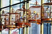 Wan Loi tea room, bird lovers meeting point. Kowloon, Hong Kong. China