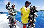 Removing oysters from lagoon for grafting operation ashore, black pearls farm at Rangiroa. Tuamotu Islands. French Polynesia