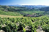 Landscape with vineyards surrounding a village. Pyrenees-Orientales. Languedoc Roussillon. France