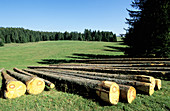 Pine trunks. Wood Industry. Doubs. Franche-Comte. France