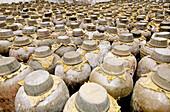 Rice wine and alcohol distillery. Wushen. Zhejiang province, China