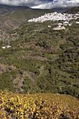 Villanueva de Algaida in the Axarquía mountains. Málaga province, Spain