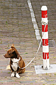Alone, Animal, Animals, Color, Colour, Contemporary, Daytime, Dog, Dogs, Exterior, Leash, Leashes, Mammal, Mammals, Obedience, Obedient, One, One animal, Outdoor, Outdoors, Outside, Pet, Pets, Pole, Poles, Seated, Sit, Sitting, Street, Streets, Tied, Urb