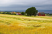Cornfields and houses with lake Vaettern near Graenna, Oestergoetland, Southern Sweden