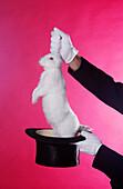 Auszug, Ein Tier, Eine Person, Eins, Entnahme, Erwachsene, Erwachsener, Extrahieren, Extrakt, Farbe, Halten, Hand, Hände, Handschuh, Handschuhe, Hut, Hüte, Innen, Kaninchen, Kopfbedeckung, Mensch, Menschen, Namenlos, Phantasie, Symbol, Symbole, Tier, Tie