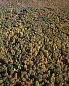 Scenic aerial: fall foliage, Jefferson county, Western pennsylvania, USA