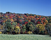 Scenic fall foliage, Coolspring, Jefferson county, Pennsylvania, USA