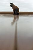 Aberglaube, Aberglauben, Allein, Alleine, Ein Tier, Eins, Einzeln, einzig, Farbe, Felis Catus, Hauskatze, Hauskatzen, Haustier, Haustiere, Hintergrundbeleuchtung, Innen, Katze, Katzen, Reflektion, Reflektionen, Rücklicht, Silhouette, Silhouetten, Spiegel