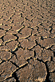 Cracked earth. Namib-Naukluft Park. Namib Desert. Namibia