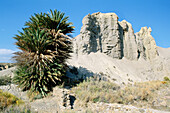 Palm trees and naked ridges of eroded sandstone in Tabernas desert, Europe s only true desert. Almería province, Andalusia, Spain