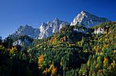 Mountain forest in autumn, Wilder Kaiser, Kaiser range, Tyrol, Austria