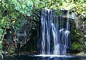 Waterfall, Garden of the Groves. Grand Bahama Island, Bahamas