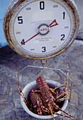 Lobsters. Mikonos. Cyclades Islands. Greece