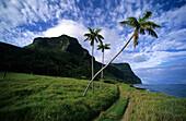 Küstenlandschaft mit Palmen, The Far Flats, Lord Howe Island, Australien