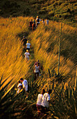A group of people walking, hiking on Yasawa Island at sunrise, Yasawa group, Fiji, South Sea