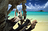 Driftwood on One Tree Coconut Beach, Blue Lagoon, Lizard Island, Great Barier Reef, Australia