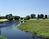 Germany: Sophiental, Alte Oder, Brandenburg, river landscape