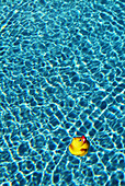 Blue, Clear, Color, Colour, Concept, Concepts, Digital composite, Duck, Ducks, Innocence, Innocent, Isolated, Isolation, Limpid, Little, Lost, Motion, Movement, Moving, One, One item, Rubber duck, Single, Still life, Swimming pool, Swimming pools, Toy, T