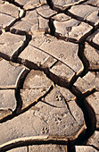 Jackal tracks on the Walvis Bay dunes. Namib desert. Namibia