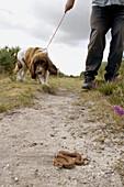 Dog walker and adder (Vipera berus) on footpath.