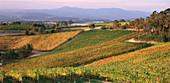 Vineyards in Yarra Valley. Victoria. Australia