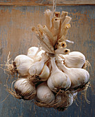 Bulb, Bulbs, Bunch, Bunches, Close up, Close-up, Closeup, Color, Colour, Flavoring, Flavouring, Food, Foodstuff, Garlic, Hang, Hanging, Healthy, Healthy food, Natural, Nourishment, Seasoning, Still life, Vertical, White, D37-172375, agefotostock