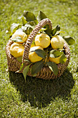 Aliment, Aliments, Basket, Baskets, Citrus fruits, Close up, Close-up, Closeup, Color, Colour, Country, Countryside, Daytime, Exterior, Food, Foodstuff, Fruit, Fruits, Full, Grass, Healthy, Healthy food, Lawn, Lemon, Lemons, Nourishment, Outdoor, Outdoors