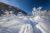 Tracks of skis in snow, Upper Bavaria, Germany