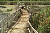 Observation walkway, marshland. Oka National park. Quebec. Canada