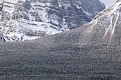 Early morning winter mountainscape from Bow Valley parkway, detail. Lake Louise, Banff National Park. Alberta, Canada