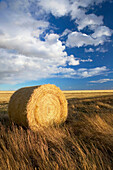 Hay roll, landscape with dramatic sky. Stand Off. Alberta, Canada