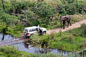 Safari through the jungle, Jeep with two elephants, an Elephant blocking the road, South Africa, Africa, mr