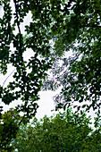 Deciduous trees, Starnberg, Bavaria, Germany