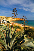 Portugal, Atlantik Kueste  Badestrand