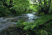 Brook, Brooks, Color, Colour, Creek, Creeks, Ecosystem, Ecosystems, Exterior, Foliage, Forest, Forests, Fresh, Freshness, Horizontal, Landscape, Landscapes, Motion, Movement, Moving, Nature, Outdoor, Outdoors, Outside, Plant, Plants, Scenic, Scenics, Veg