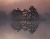 Calm, Calmness, Cold, Coldness, Color, Colour, Ecosystem, Ecosystems, Exterior, Fog, Forest, Forests, Horizontal, Humidity, Lake, Lakes, Landscape, Landscapes, Mirror image, Mirror images, Mist, Mood, Natural phenomena, Natural phenomenon, Nature, Outdoo