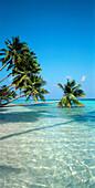 Aussen, Baum, Bäume, Draussen, Farbe, Ferien, Horizont, Horizonte, Insel, Inseln, Landschaft, Landschaften, Meer, Natur, Palme, Palmen, Pflanze, Pflanzen, Seelandschaft, Seelandschaften, Sommer, Sommerlich, Tropisch, Urlaub, Vegetation, Vertikal, Wasser,
