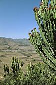 Agricultural landscape. Near Wuchale. Ethiopia.