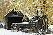 Old Wagon in snow. Winter. McCarthy. Interior. Alaska. USA.