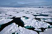 Aussen, Draussen, Eis, Eiskalt, Entfernt, Farbe, Fern, Gefroren, Horizont, Horizontal, Horizonte, Kalt, Kälte, Landschaft, Landschaften, Meer, Natur, Naturerscheinung, Oberfläche, Oberflächen, Seelandschaft, Seelandschaften, Stille, Tageszeit, Unendlich,