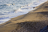 Alone, Animal, Animals, Beach, Beaches, Color, Colour, Contemporary, Daytime, Deserted, Dog, Dogs, Domestic animal, Domestic animals, Exterior, Free, Freedom, Nature, One, One animal, Outdoor, Outdoors, Outside, Pet, Pets, Sand, Sea, Shore, Shores, Water
