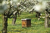Germany, Brandenburg, Werder/Havel, Cherry Blossom, Beehive.