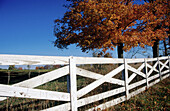 Autumn, Autumnal, Color, Colour, Country, Countryside, Daytime, Deserted, Exterior, Fall, Fence, Fences, Grass, Grasses, Green, Horizontal, Nature, Nobody, Outdoor, Outdoors, Outside, Rural, Scenic, Scenics, Season, Seasons, Separated, Separation, Silenc