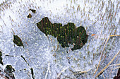 Ice formations, cracked around green moss