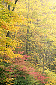 Background, Backgrounds, Canopy, Color, Colour, Daytime, Exterior, Foliage, Forest, Forests, Natural background, Natural backgrounds, Nature, Outdoor, Outdoors, Outside, Plant, Plants, Scenic, Scenics, Tree, Trees, Vegetation, Woods, Yellow, E43-591166,