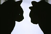 profile silhouette of 2 black cats looking at each other