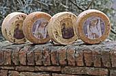 Pecorino sheep cheeses. Certaldo Alta. Tuscany, Italy