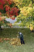 Aktivität, Allein, Alleine, Arbeiten, Arbeitend, Arbeitende, Außen, Baum, Bäume, Beruf, Berufe, Eine Person, Eins, Einzeln, einzig, Erwachsene, Erwachsener, Farbe, Ganzkörper, Ganzkörperaufnahme, Gartenarbeit, Gärtner, Haufen, Herbst, Jahreszeit, Jahresz